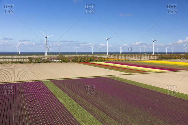 Aerial view of the tulip fields in North Holland, Netherlands