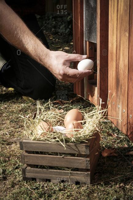 Hand holding hen's egg - Offset