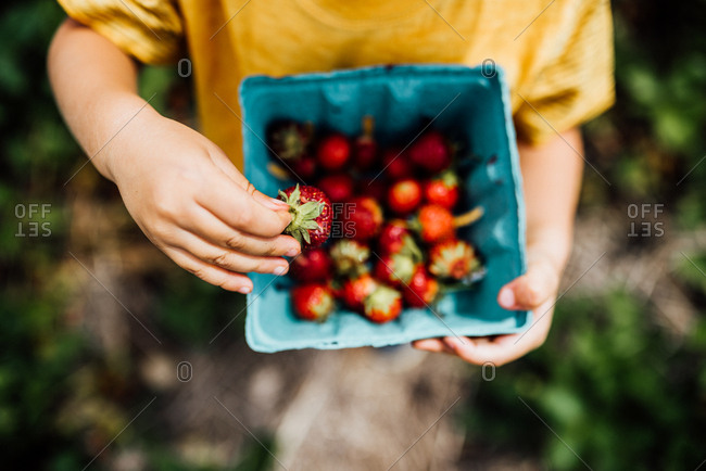 Child holding fresh picked strawberries in a container
