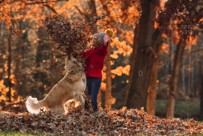 Young girl playing in a leaf pile with a Golden Retriever dog