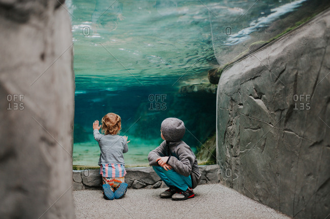 Two children looking at fish tanks at the zoo