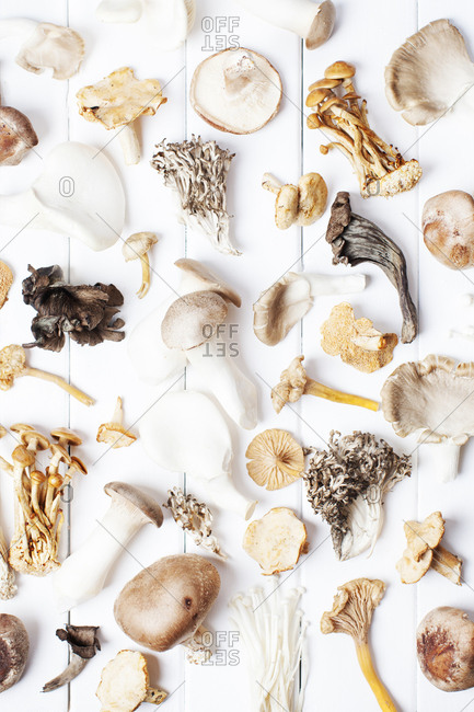 Variety of mushrooms arranged on a white background