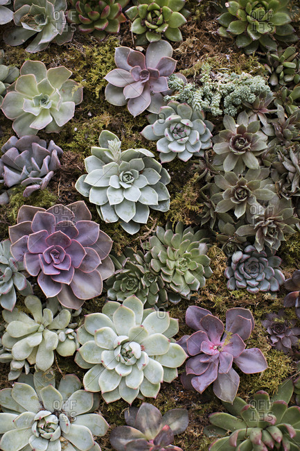 Variety of succulent plants growing in a garden