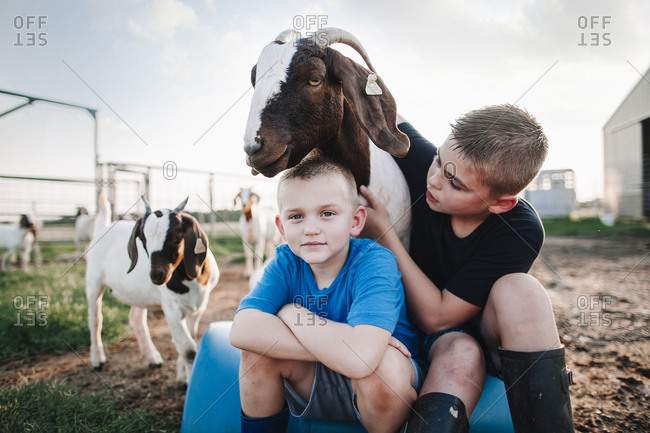 Two boys petting a goat