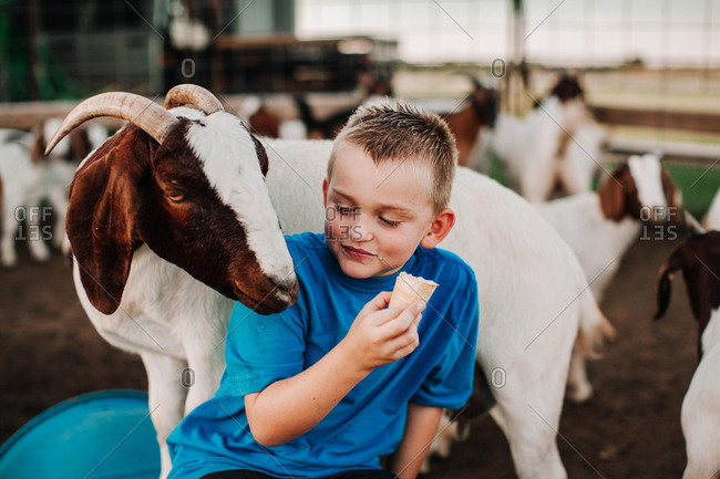 A boy eating ice cream with a goat