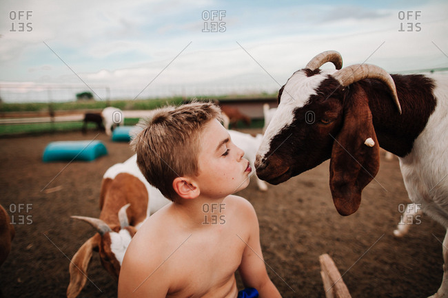 A boy looking at a goat