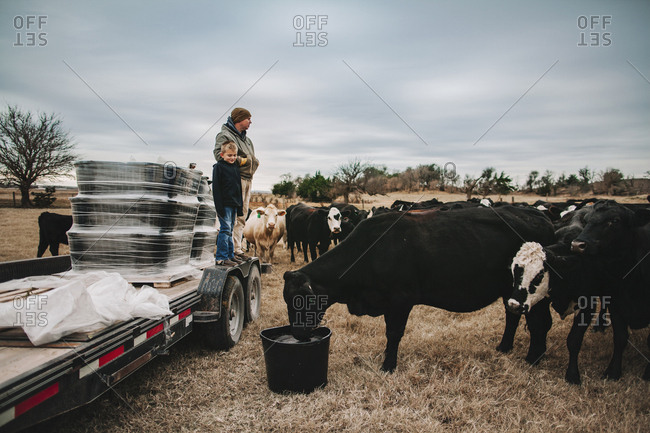 A man and boy feeding cattle