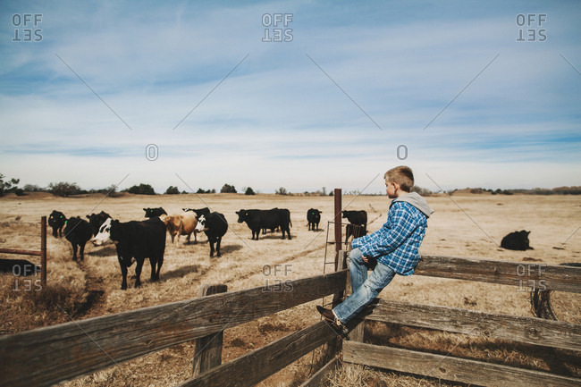 A boy siting on a wooden fence looking at cattle