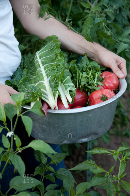 Hands hold bowl of vegetables in a garden