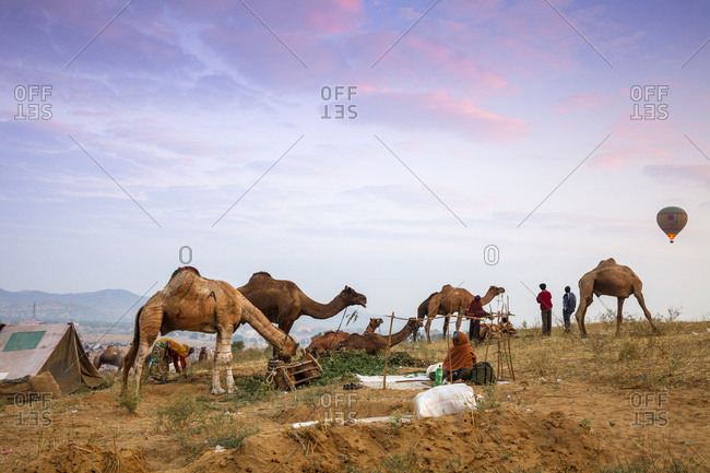 November 19, 2012: Pushkar Camel Fair, Pushkar, Rajasthan, India, Asia