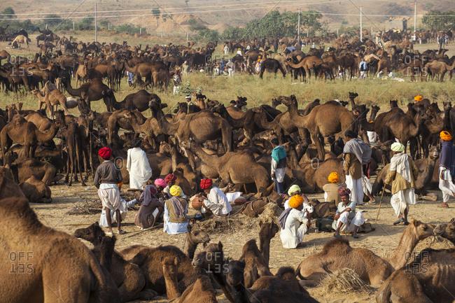 November 19, 2012: Pushkar Camel Fair, Pushkar, Rajasthan, India, Asia