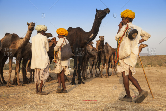 November 21, 2012: Pushkar Camel Fair, Pushkar, Rajasthan, India, Asia