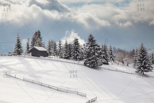Snowy winter landscape in the Carpathians, Tihuta Pass, Romania, Europe