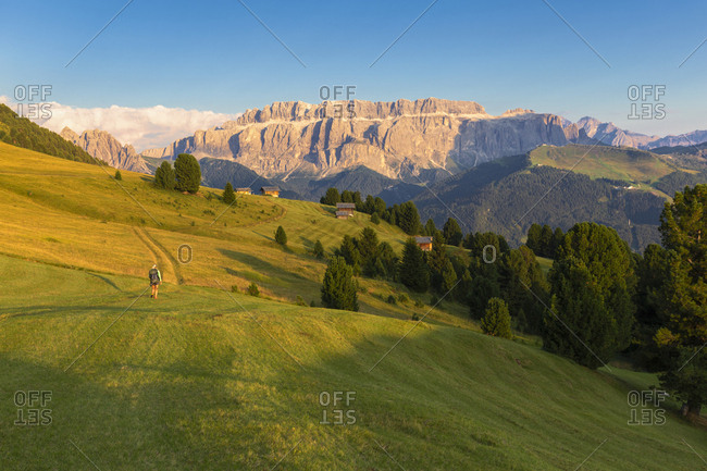 Hiker walks in the pasture with Sella Group in the background, Gardena Valley, South Tyrol, Dolomites, Italy, Europe