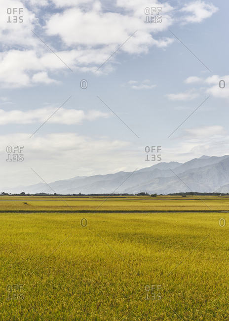 Rice fields and mountains under bright morning light