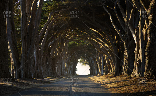USA- California- Inverness- Treelined road in the evening