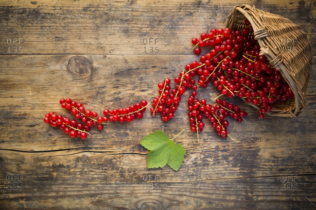 Red currants in basket on wood