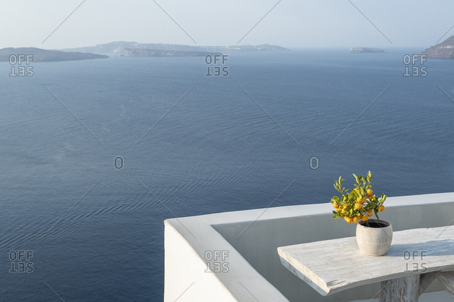 Orange trees on terrace in front of the sea