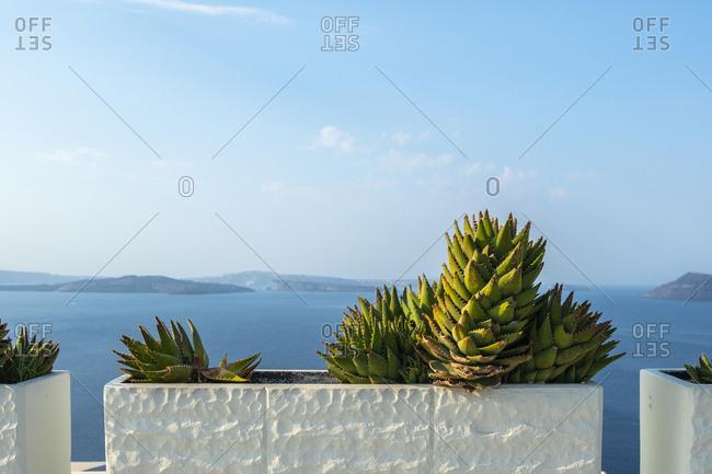 Succulents in pots, Greece