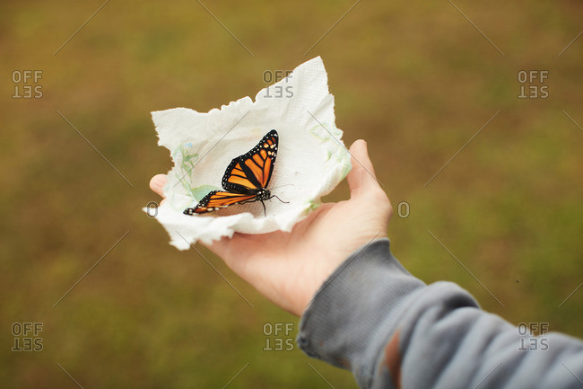 Person holding a monarch butterfly