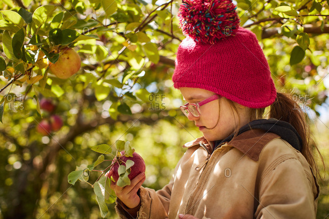 Girl wearing a knit hat holding and looking at a freshly picked apple in an orchard