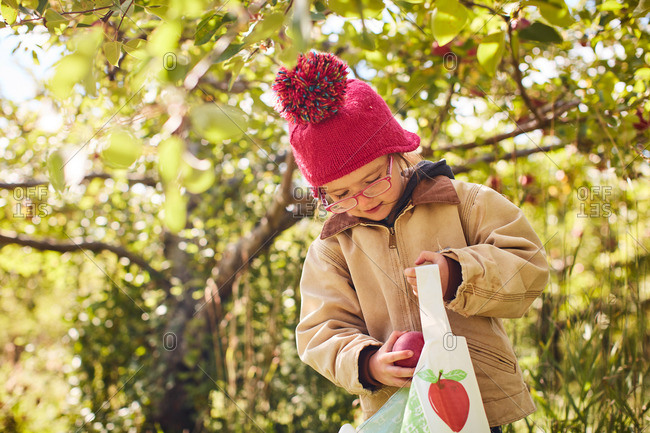 Girl wearing a knit hat putting a freshly picked ripe apple into a bag