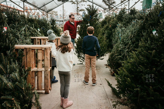 Kids shopping with their father for a christmas tree