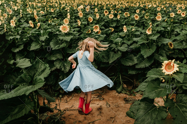 Little girl spinning in a field of sunflowers