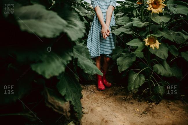 Little girl walking through a field of sunflowers