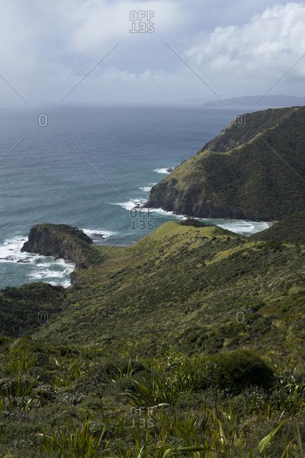 Lush cliffside in new Zealand
