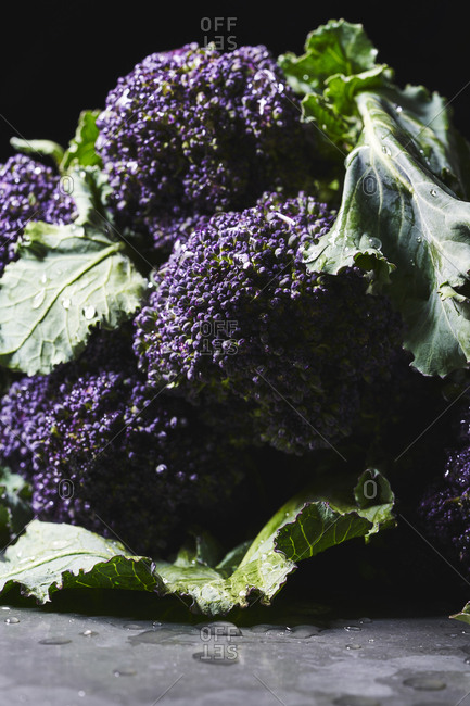 A view of the heads of purple sprouting broccoli lying down with the heads facing camera.