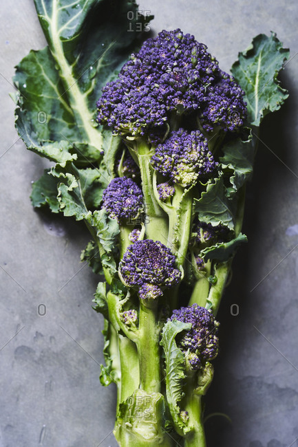 A portrait of a few branches of purple sprouting broccoli with leaves on a metallic surface.