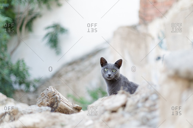 From below shot of beautiful gray cat staring in camera while sitting on rocky surface