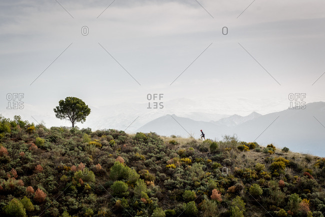 Unrecognizable person climbing green hill in direction of lonely tree in amazing nature