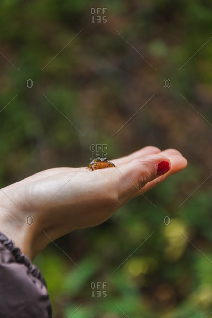 Crop hand of lady with little anura on palm on blurred background in Isoba, Castile and Leon, Spain