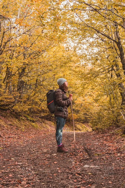 Lady in hat and ski jacket with knapsack and walking stick on footpath between autumn forest in Isoba, Castile and Leon, Spain