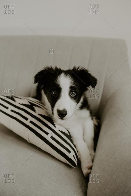 Cute puppy lying on sofa