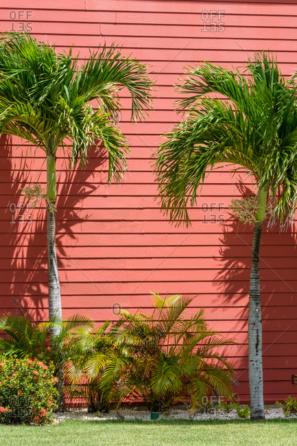 Two tiny palms growing near red wall of cottage on wonderful sunny day