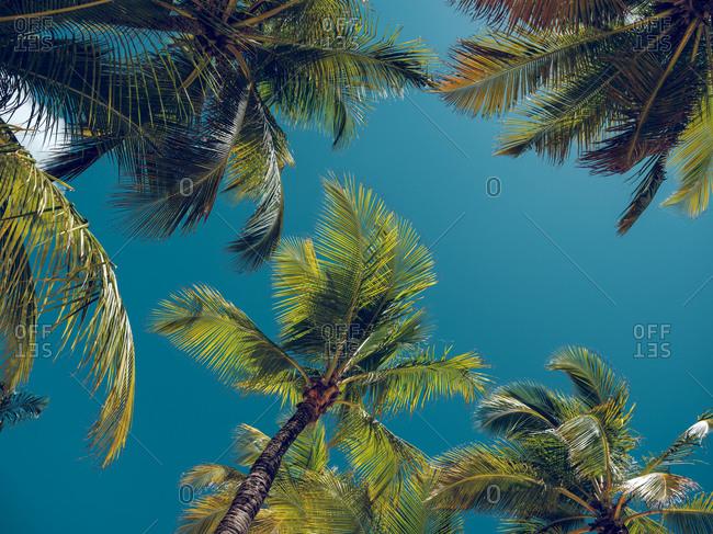 Wonderful palms growing near sea