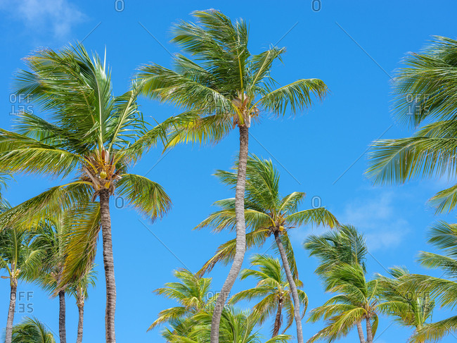 Beautiful palms against blue sky
