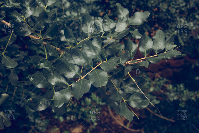 From above shot of thin twigs of wonderful shrub with delicate green leaves growing in park