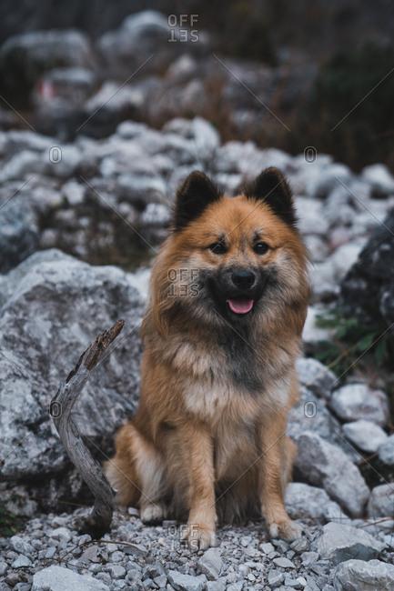 Cute dog sitting on stony ground