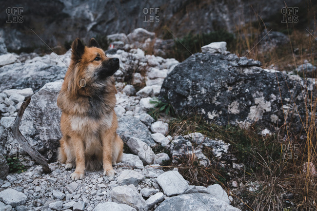 Furry dog sitting near rock