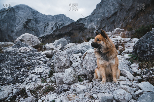 Sweet Elo dog looking away while sitting on mountain slope in countryside