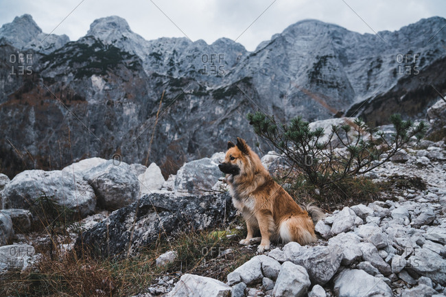 Furry dog sitting near rock