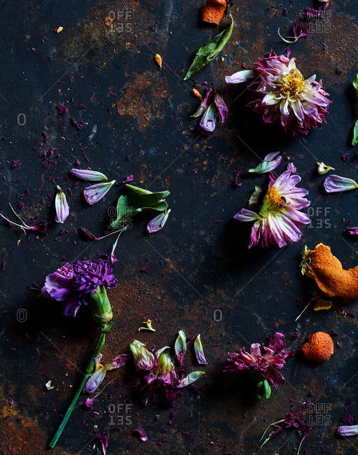 Dried flowers on a dark background