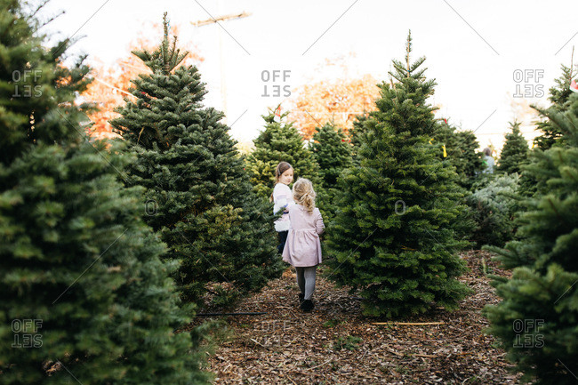Children walking through a Christmas tree farm