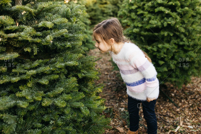 Girl examining a tree at a Christmas tree farm