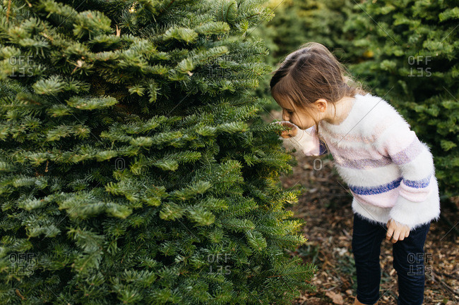 Girl smelling the branch of a tree at a Christmas tree farm