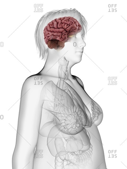 Illustration of an obese woman's brain.